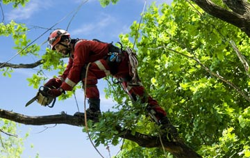 find trusted rated Hillingdon tree surgeons