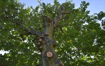 what is Hillingdon tree surgery?